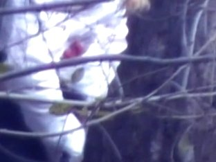 Public voyeur captures a sexy girl peeing in the woods