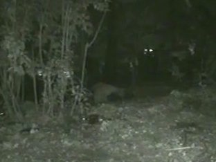 Woman pissing in the forest on nighttime voyeur video
